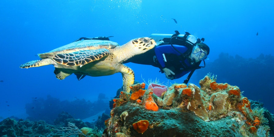 Top 10 Places in the Western Caribbean to Go Snorkeling and Diving