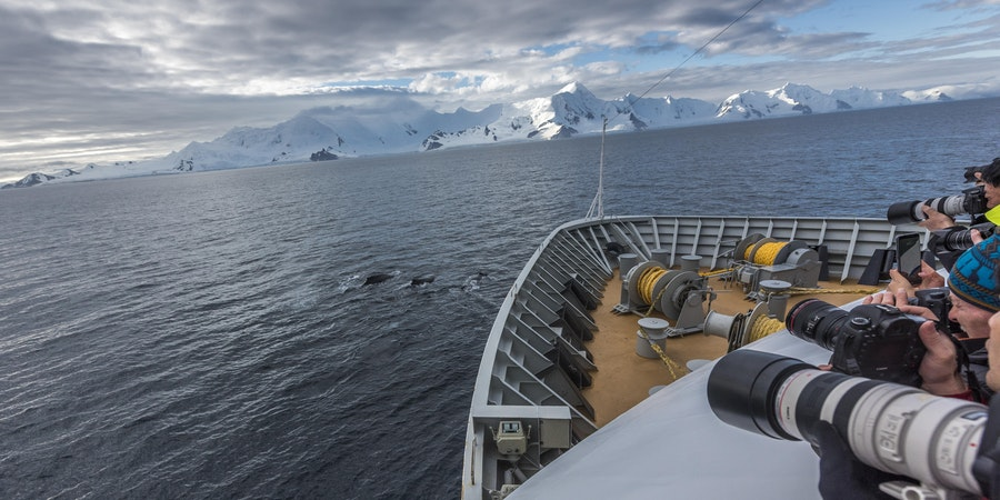 Hurtigruten whale sightings (Photo credit: Hurtigruten)