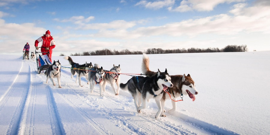 Dog-sledding (Photo: gillmar/Shutterstock.com)