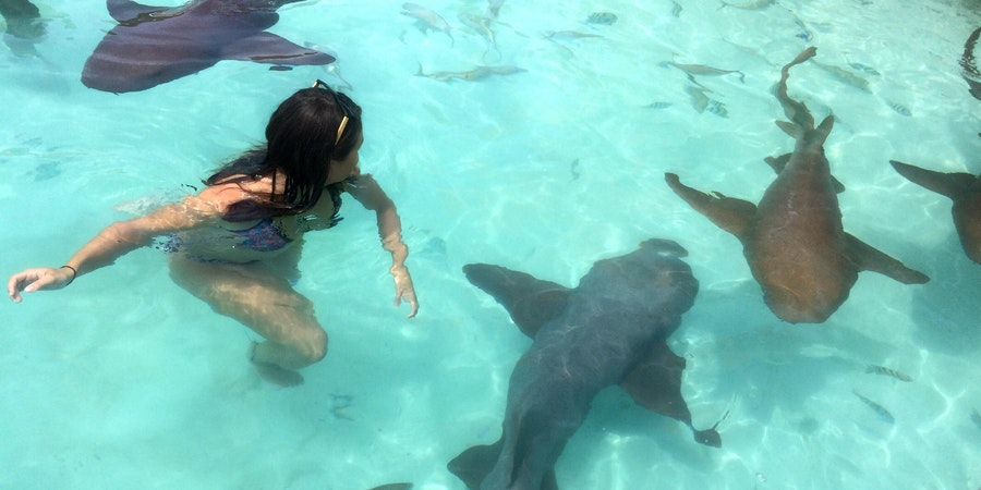 Swimming with sharks in the Bahamas (Photo: Zoe Esteban/Shutterstock.com)