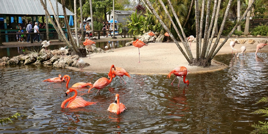 The Wildlife Sanctuary of Flamingo Gardens (Photo: Jillian Cain Photography/Shutterstock)