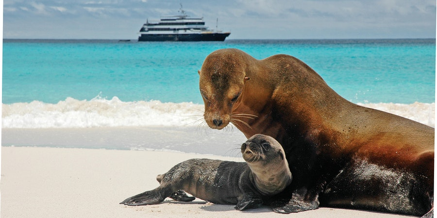 12 Pictures of Galapagos Cruise Wildlife