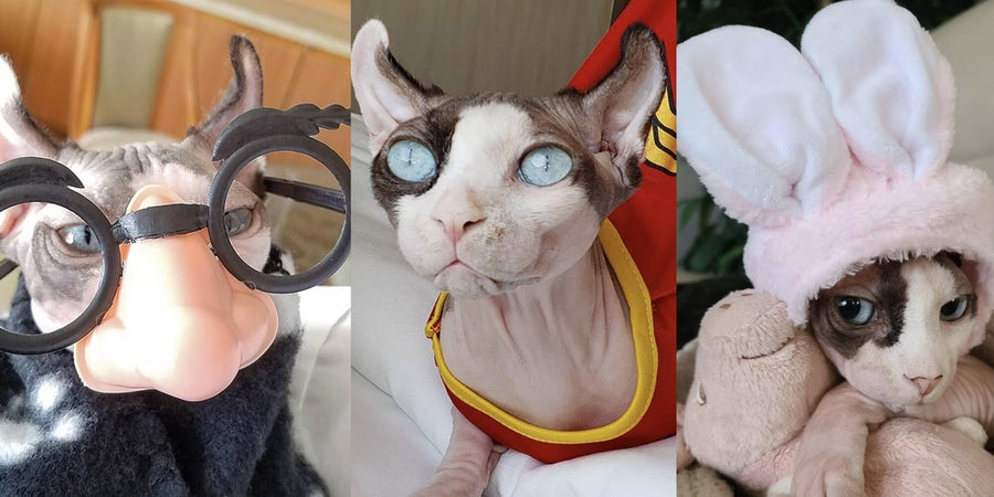 13 Times This Cruise Cat Was Absolutely Purr-fect For Halloween
